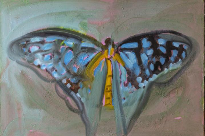 Farfalla blu web